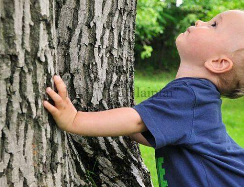 Laiptu gamyba iš bioenergetiškai stipriu medžių
