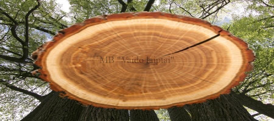 Lietuviško medžio Laiptu pakopos